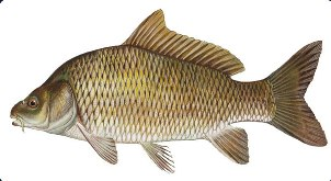 прикормки для риби купити